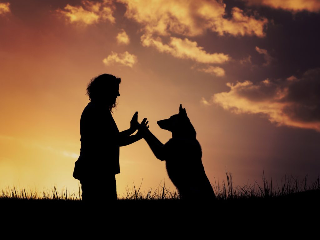 Bente's Dog Training Bente Nelson sunset harmony