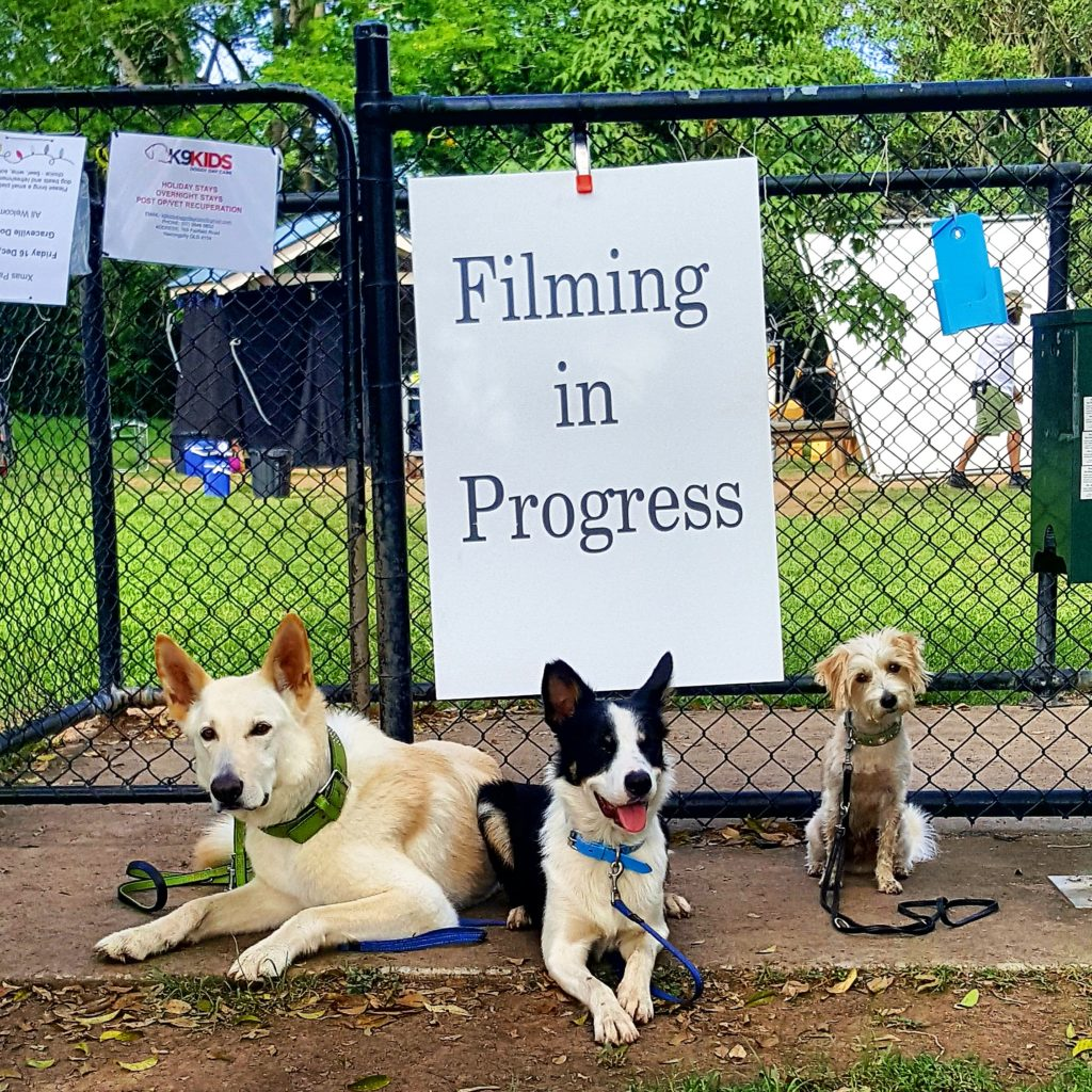 Bente's Dog Training Brisbane Film and Trick Dogs Filming in Progress Nelson, Macgyver & Mr Big