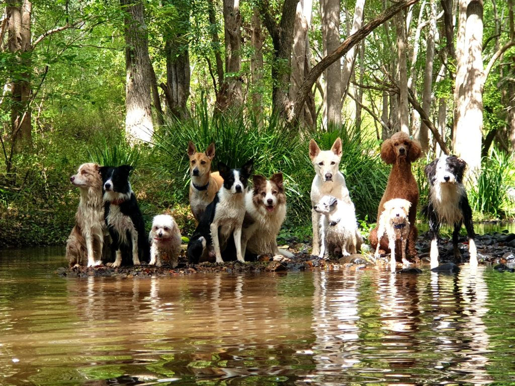 Bente's Dog Training socialise, water & fun